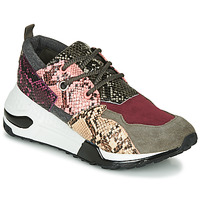 Shoes Women Low top trainers Steve Madden CLIFF Multicolour