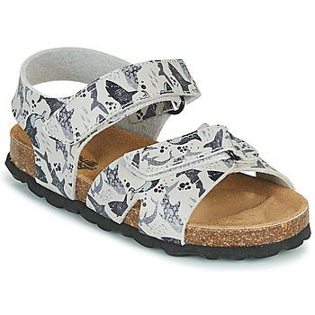Shoes Boy Sandals Citrouille et Compagnie OMAYO Grey