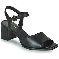 Shoes Women Sandals Minelli TURINA Black