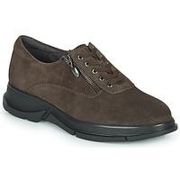 Shoes Women Low top trainers Scholl BRISTOL ZIP Brown