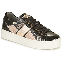 Shoes Women Low top trainers NeroGiardini BETTO Black / Gold